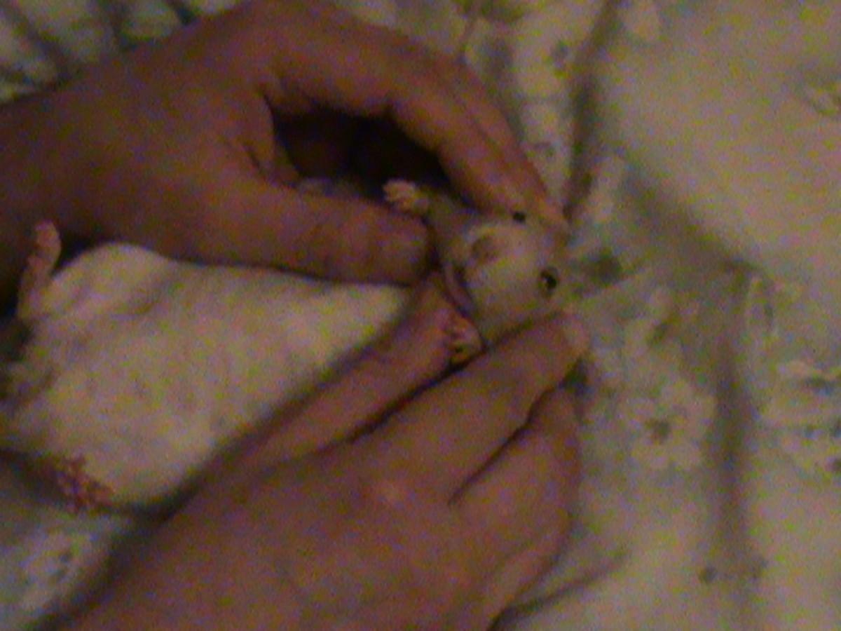 Having a Rat as a Pet
