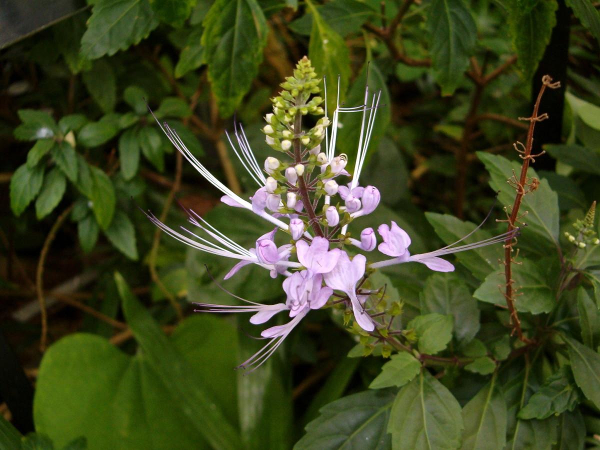 Wispy light purple flower