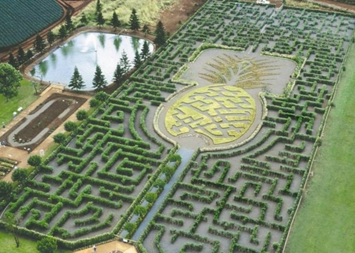 The World's Largest Maze at the Dole Plantation