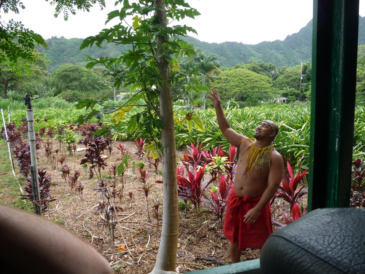 Hilarious tour guides at the Macadamia Nut Farm