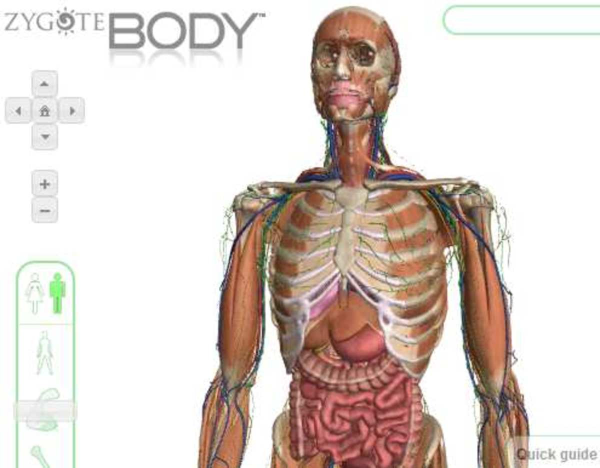 How to Use Zygote Body  to See a Human Body In 3D
