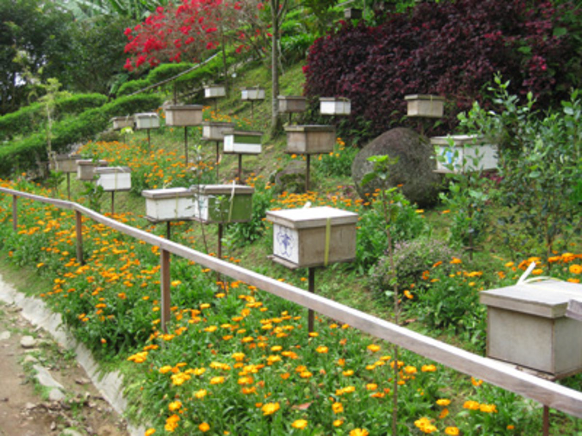 Lots of beehive boxes were sprinkled around the gardens.