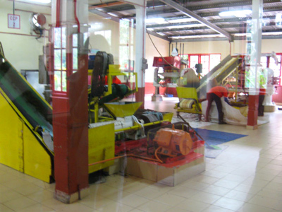 The stages of tea production in the factory.