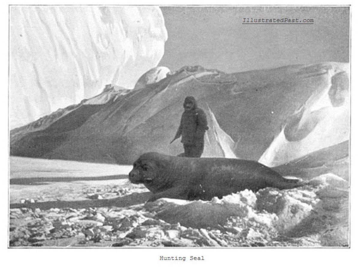 Hunting Antarctic Seals
