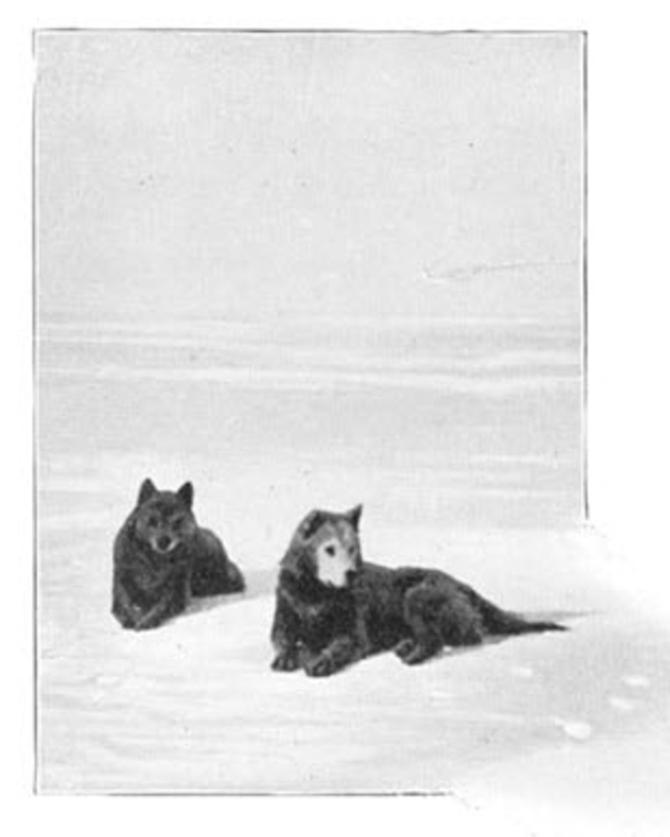 Two of the expedition's dogs.
