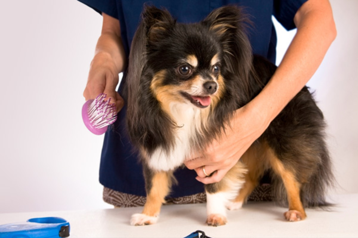 grooming will be a necessary expense for most dogs that don't shed