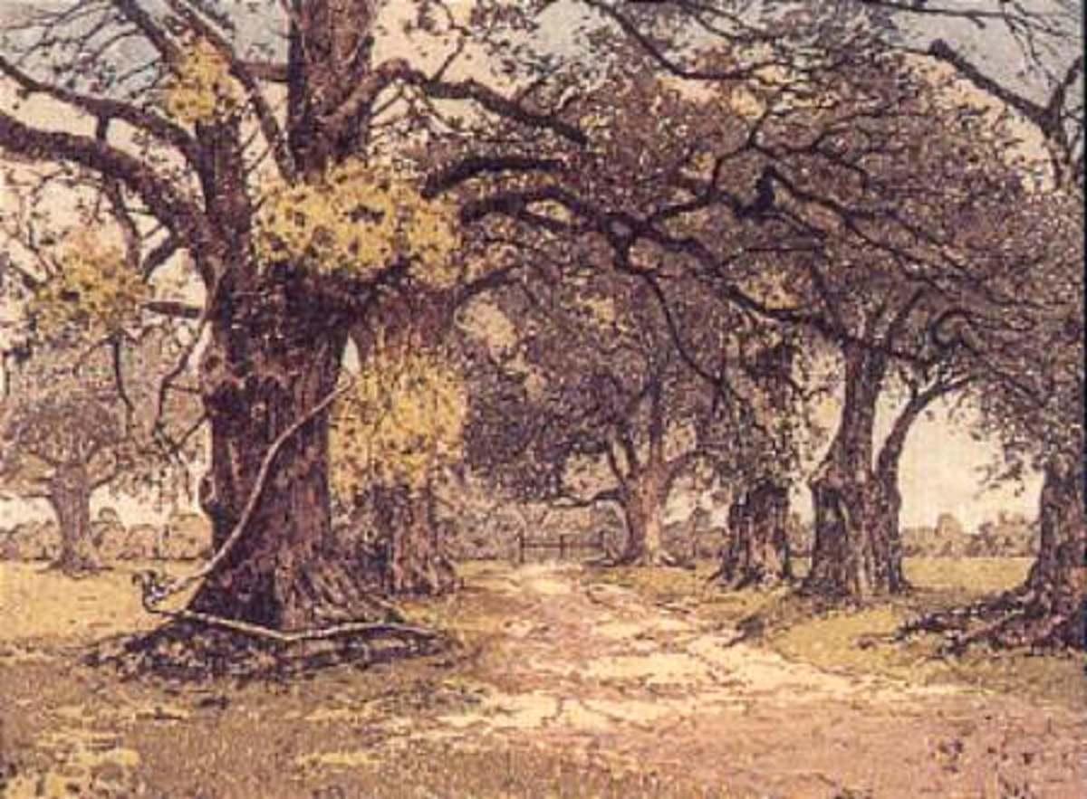 American Oak for Wine Barrels