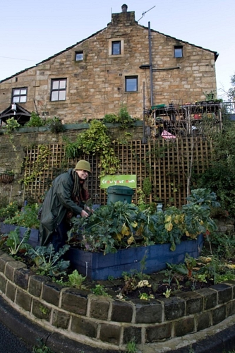 grow-vegetables-in-villages-towns-cities-parks-and-public-places-instead-of-flowers-free-food-for-all