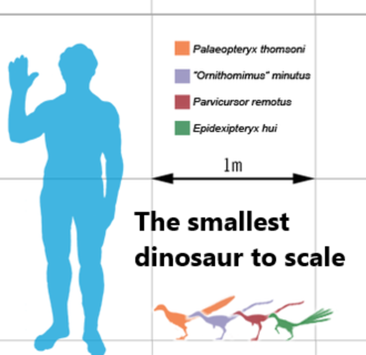 Chart comparing the relative sizes of several of the smallest non-avian dinosaurs.