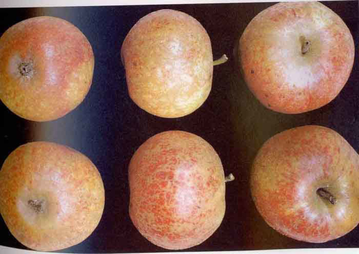 Mettais apples