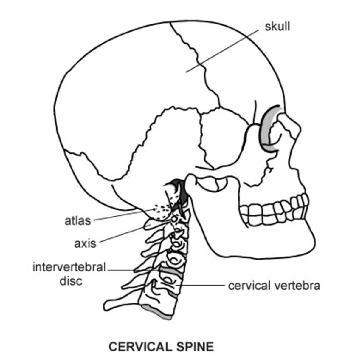 every-body-part-has-a-story-1-a-history-of-anatomical-terms