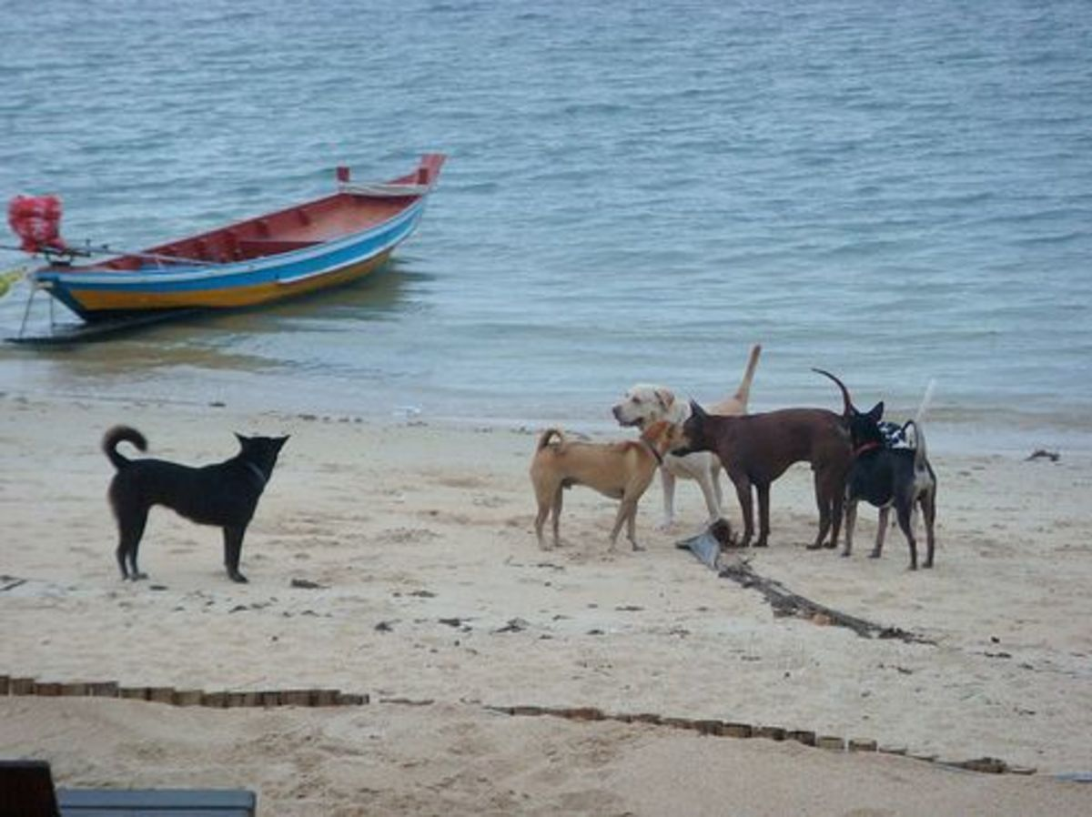 Not all Soi dogs are ill tempered