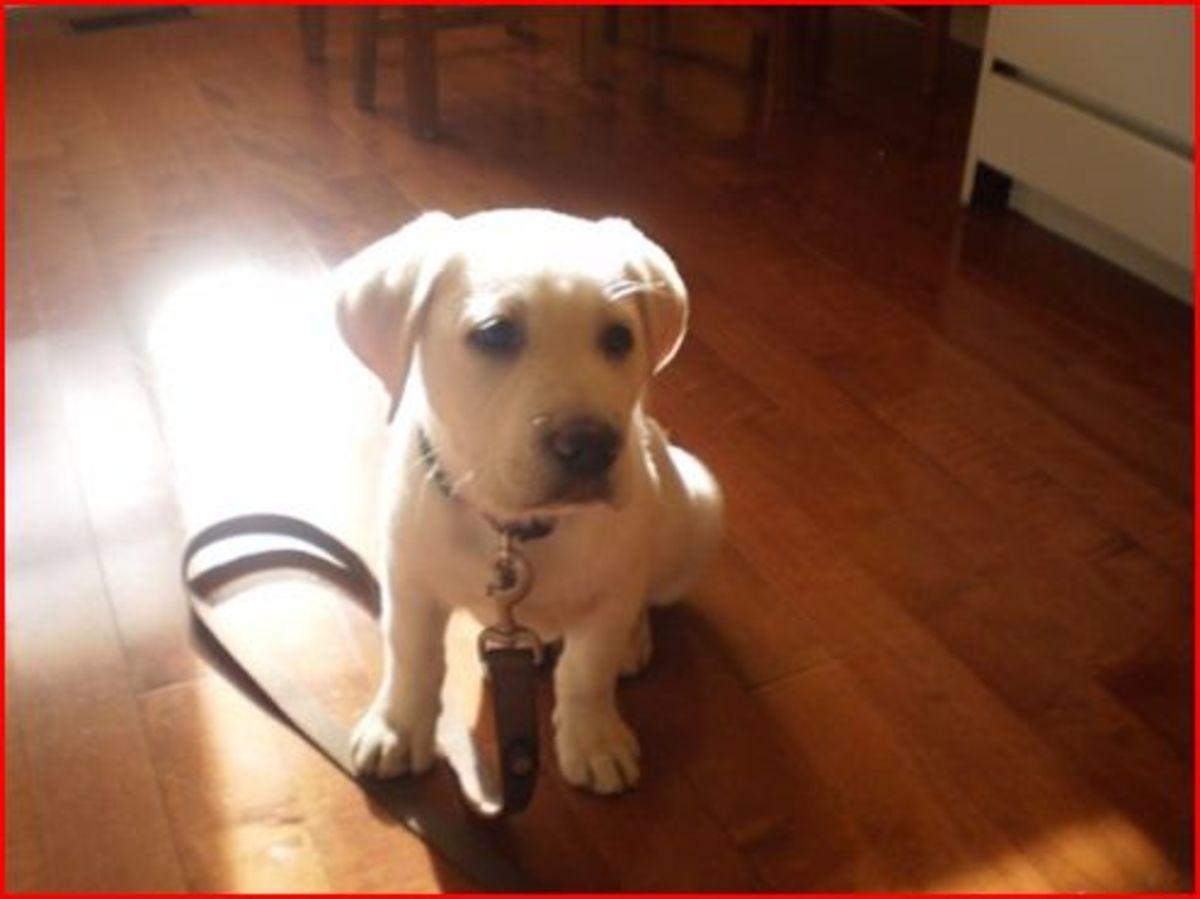 Leo at 10 weeks