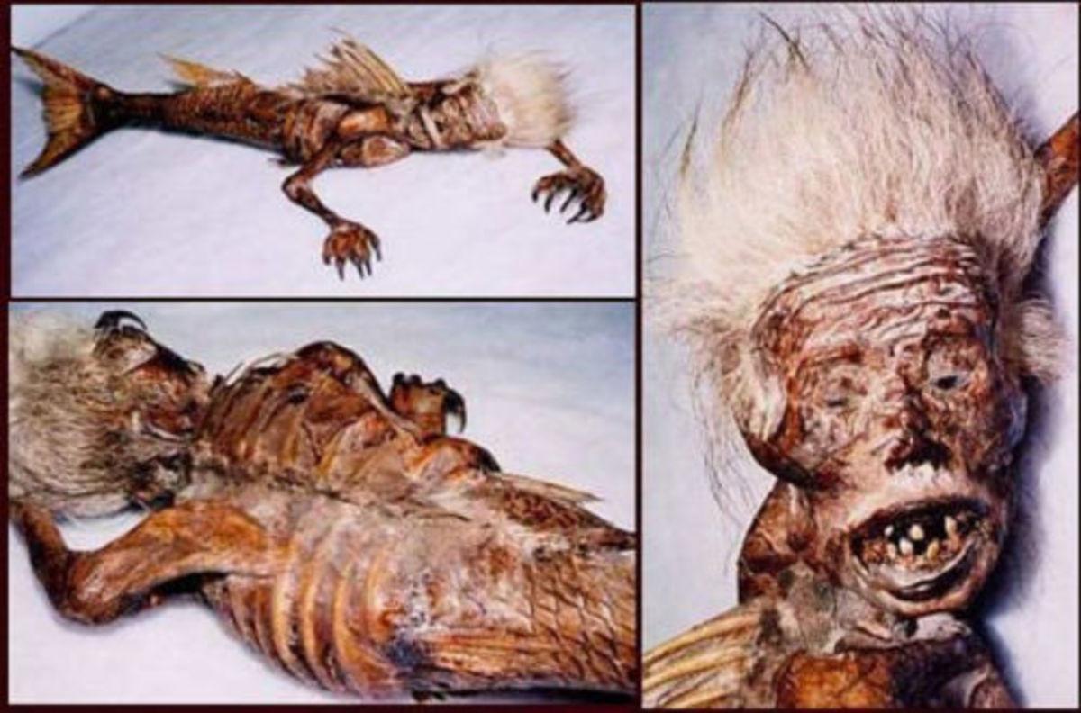 Mermaid Hoax after The Tsunami