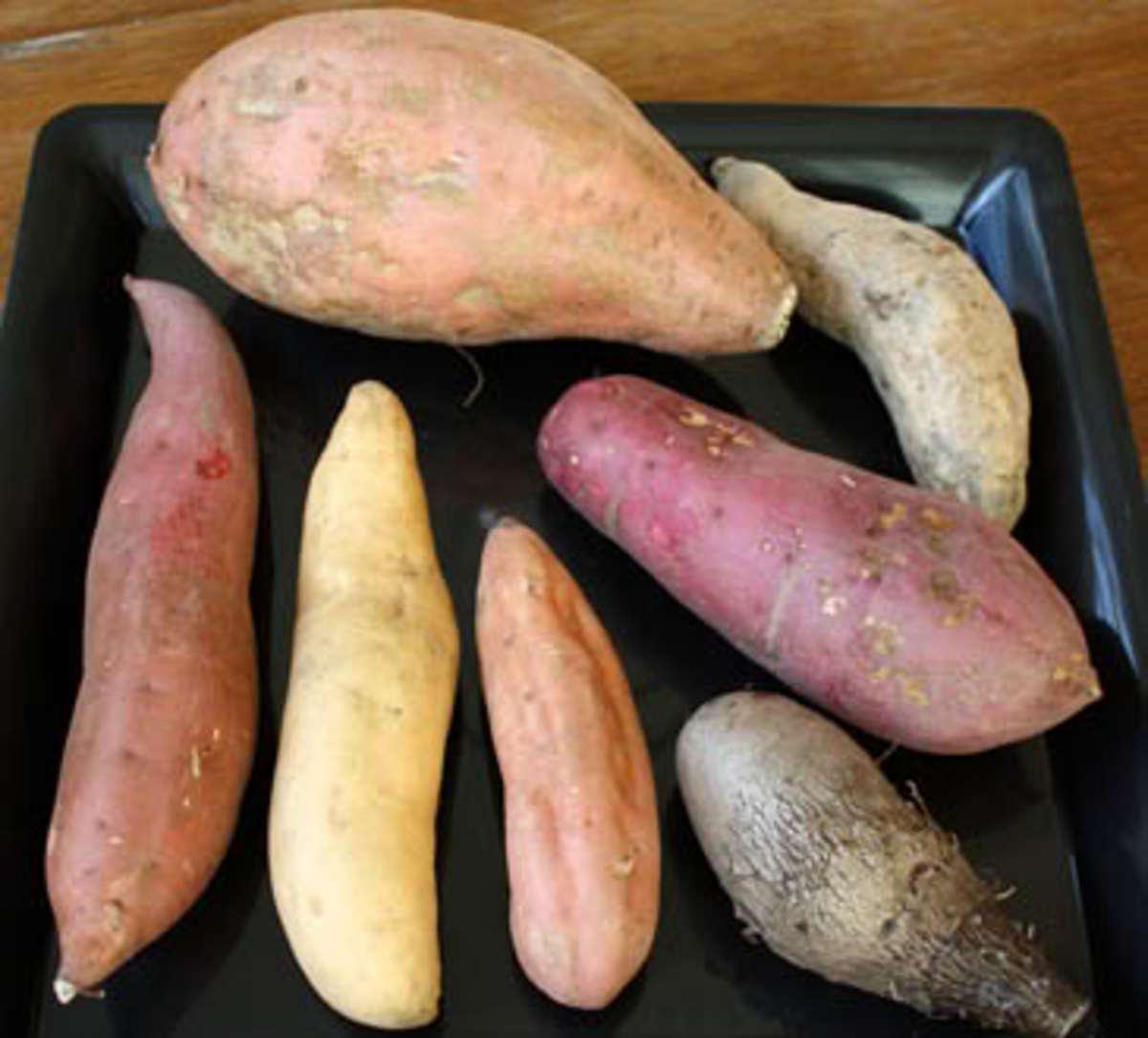 YAMS vs SWEET POTATOES - Yam and Sweet Potato Nutritional Comparison