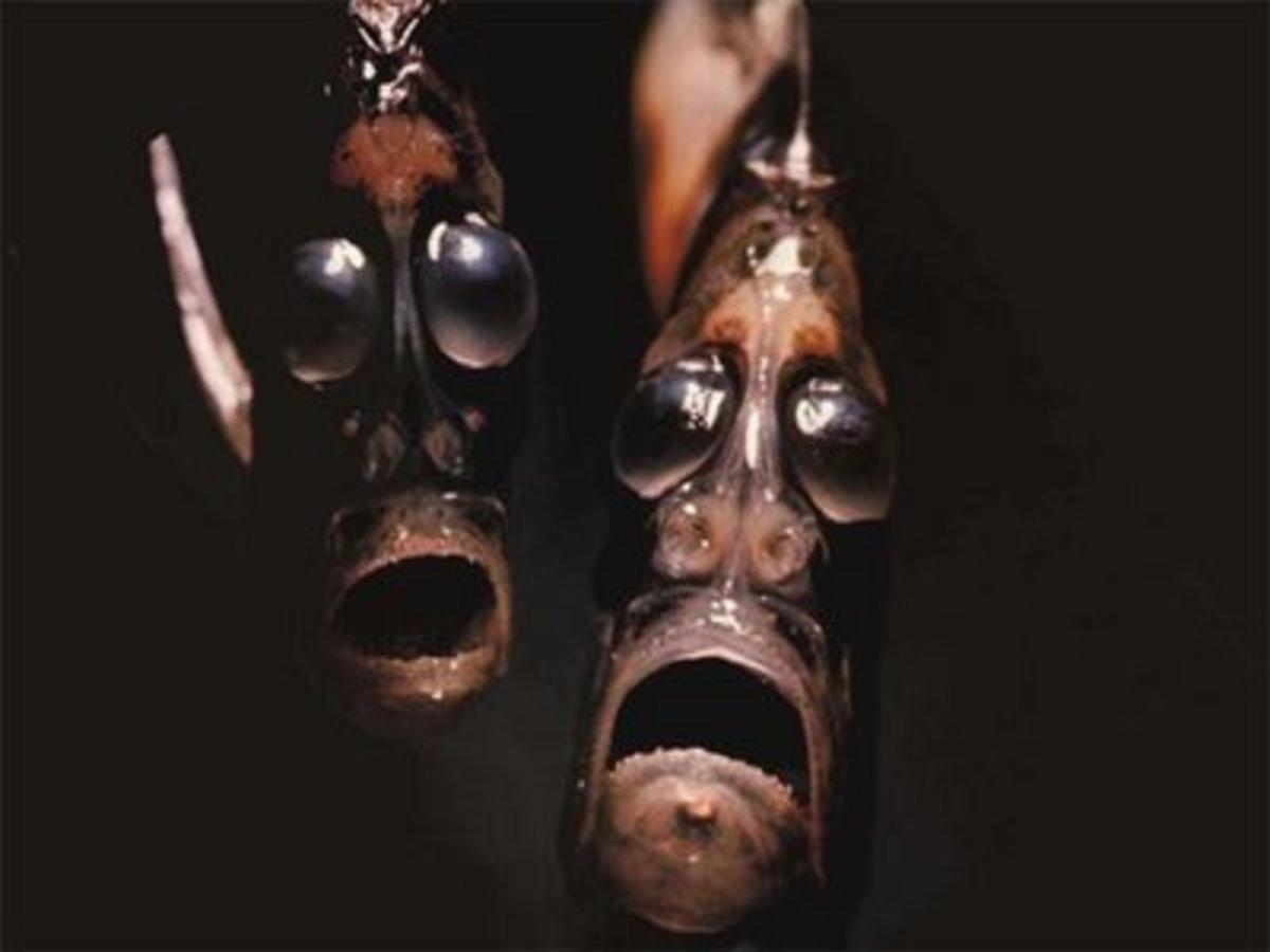 Deep Sea (Marine) Hatchet Fishes