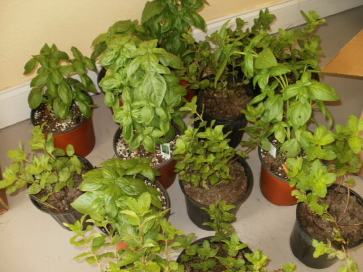 Veggie plants from Natural Farm and Educational Center
