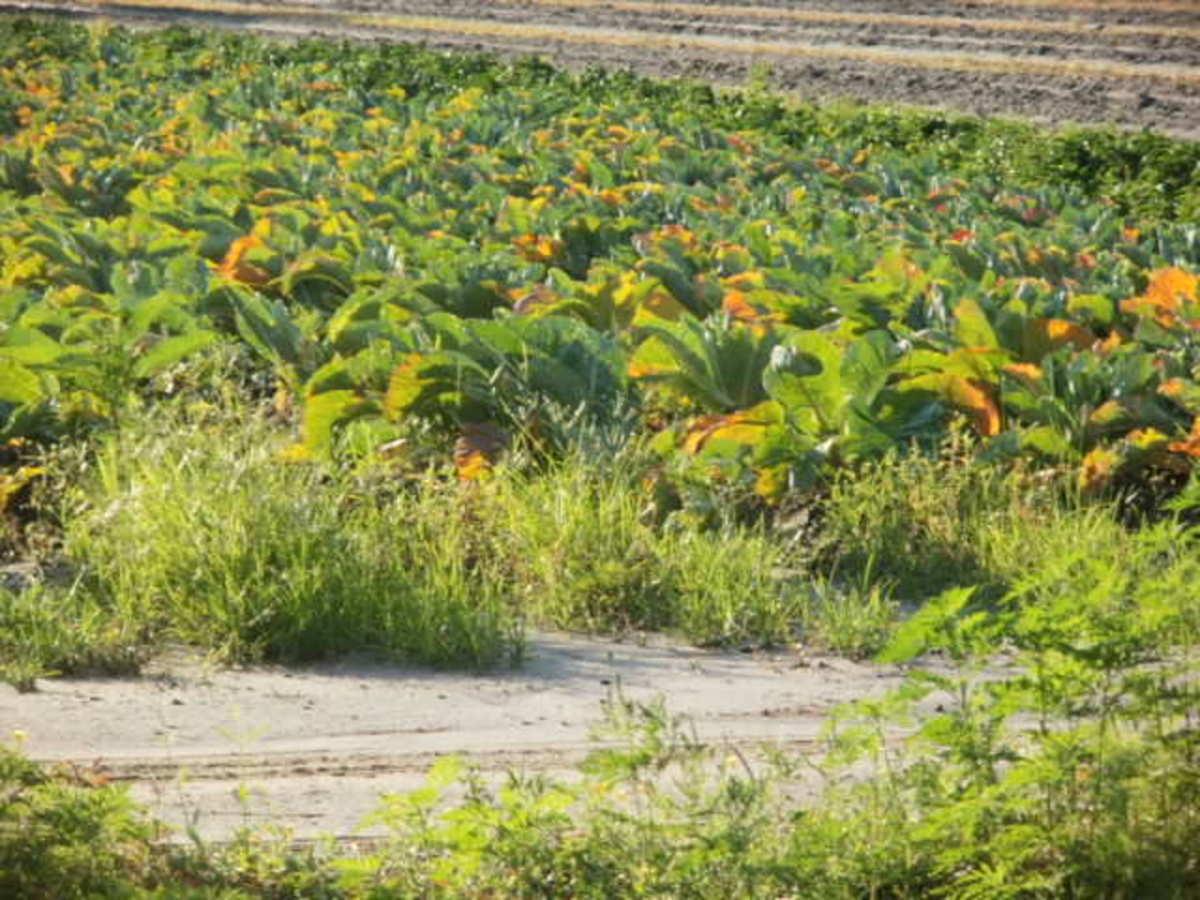 The Barefoot Farmer in Samsula, FL