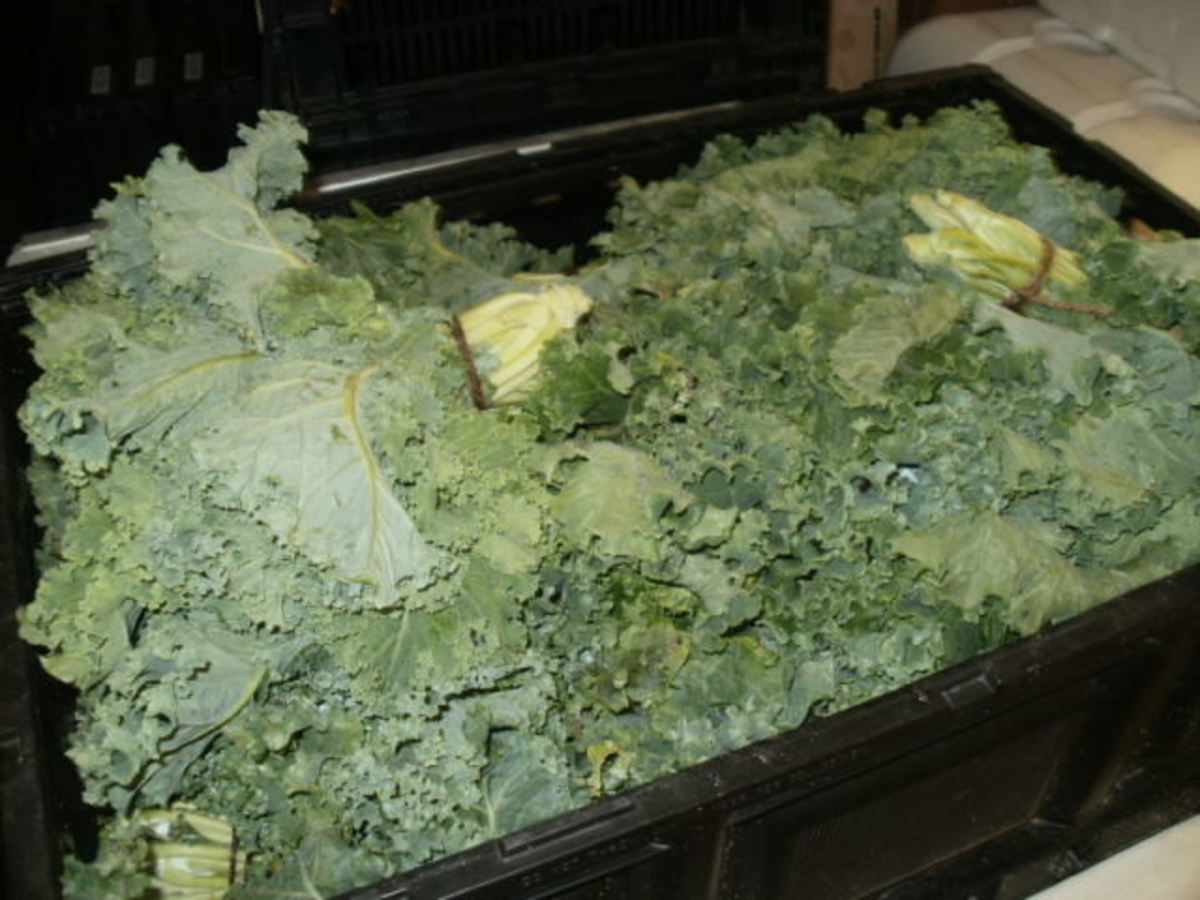 Kale from The Farm at Rockledge