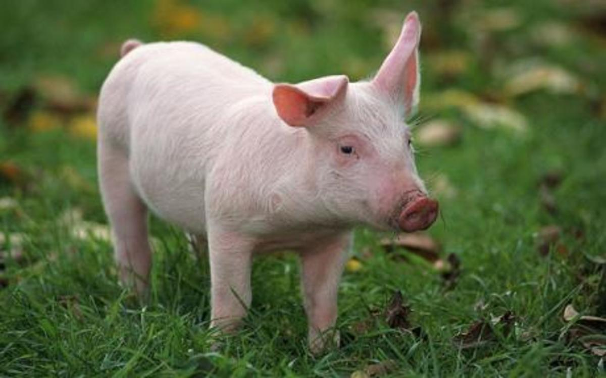 smartest-animals-in-the-world