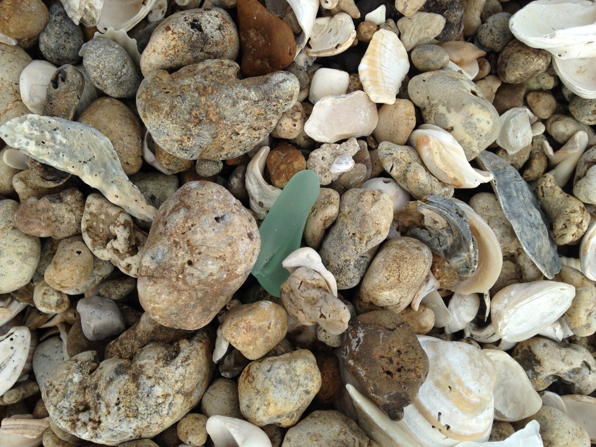 A good find among the oyster shells and rocks.