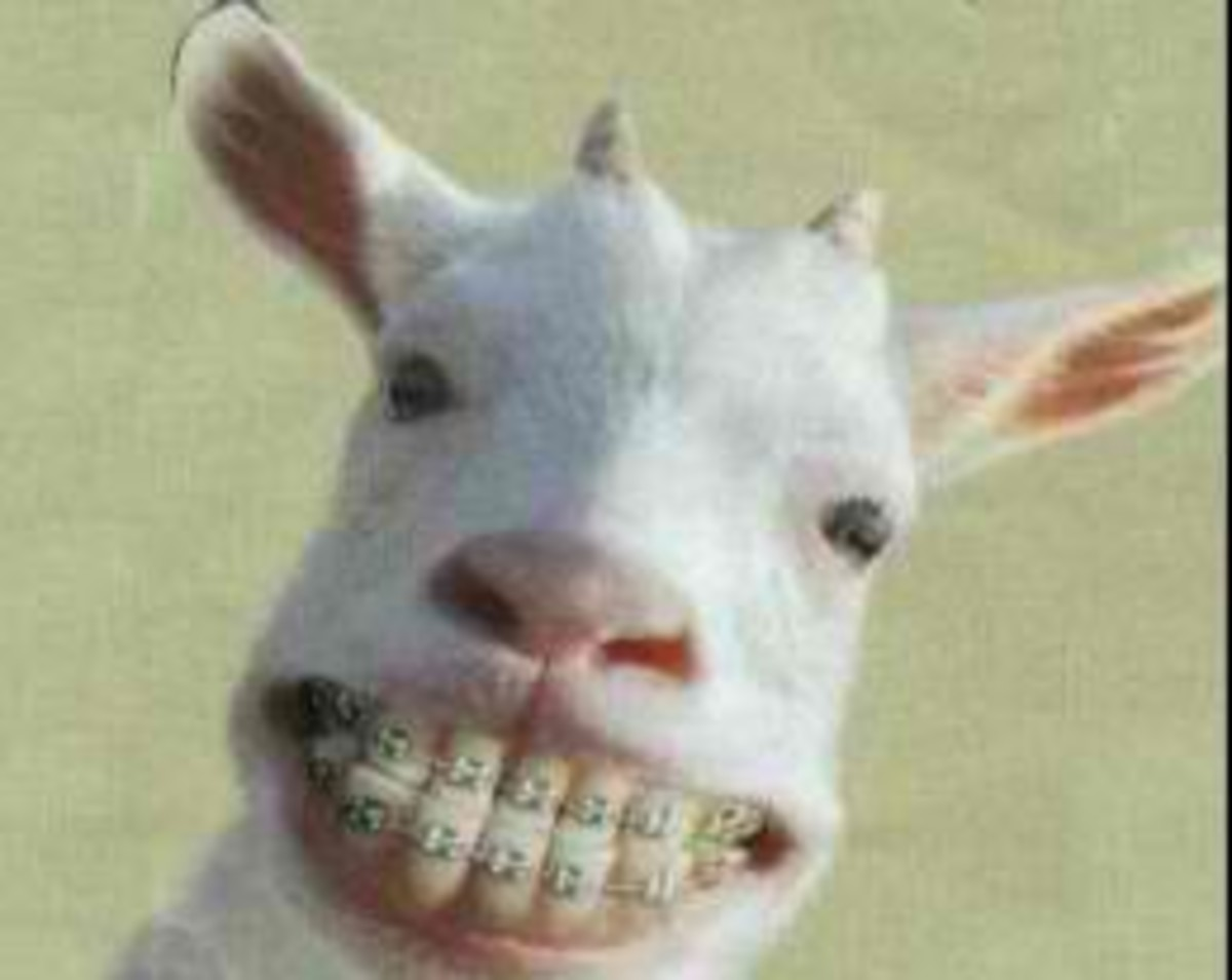 Goat still has funny smile