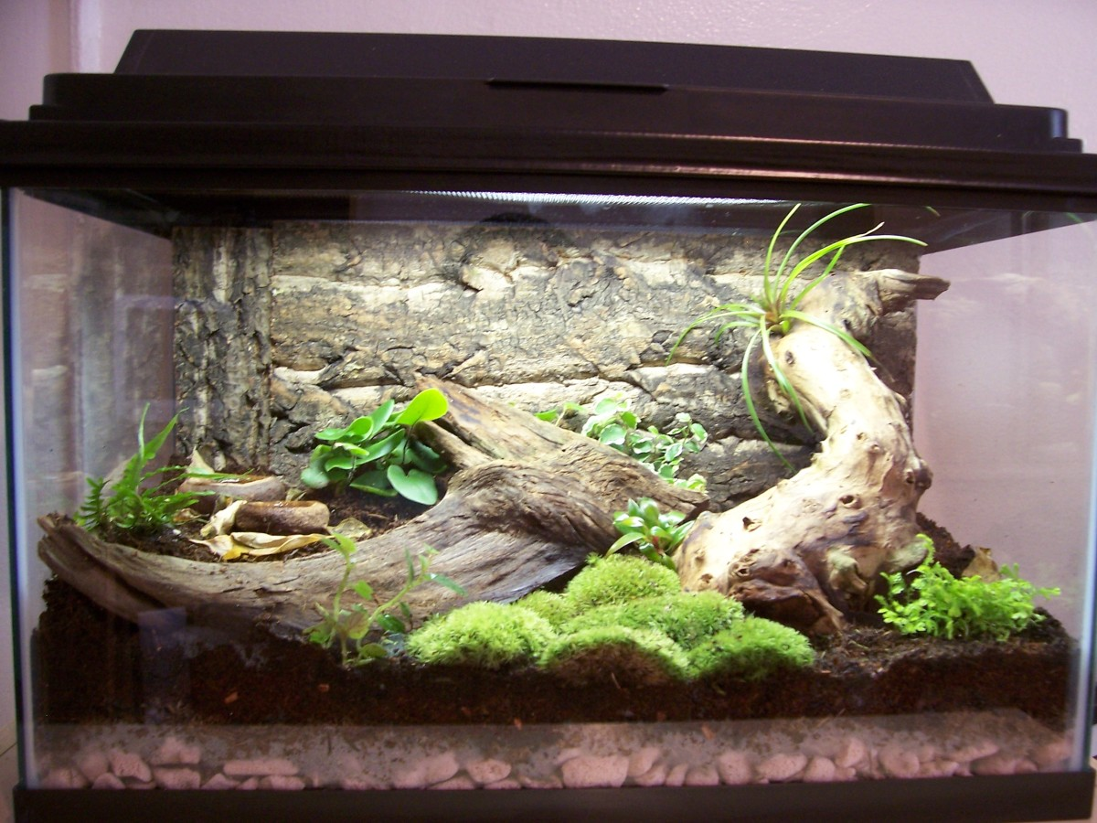 How to Setup a Naturalistic Vivarium 10 Gallon Dart Frog Vivarium