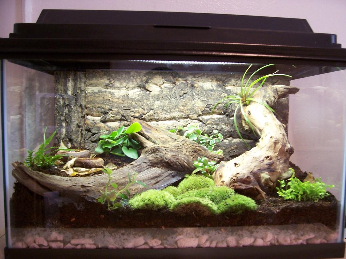 ball python tank setup ideas