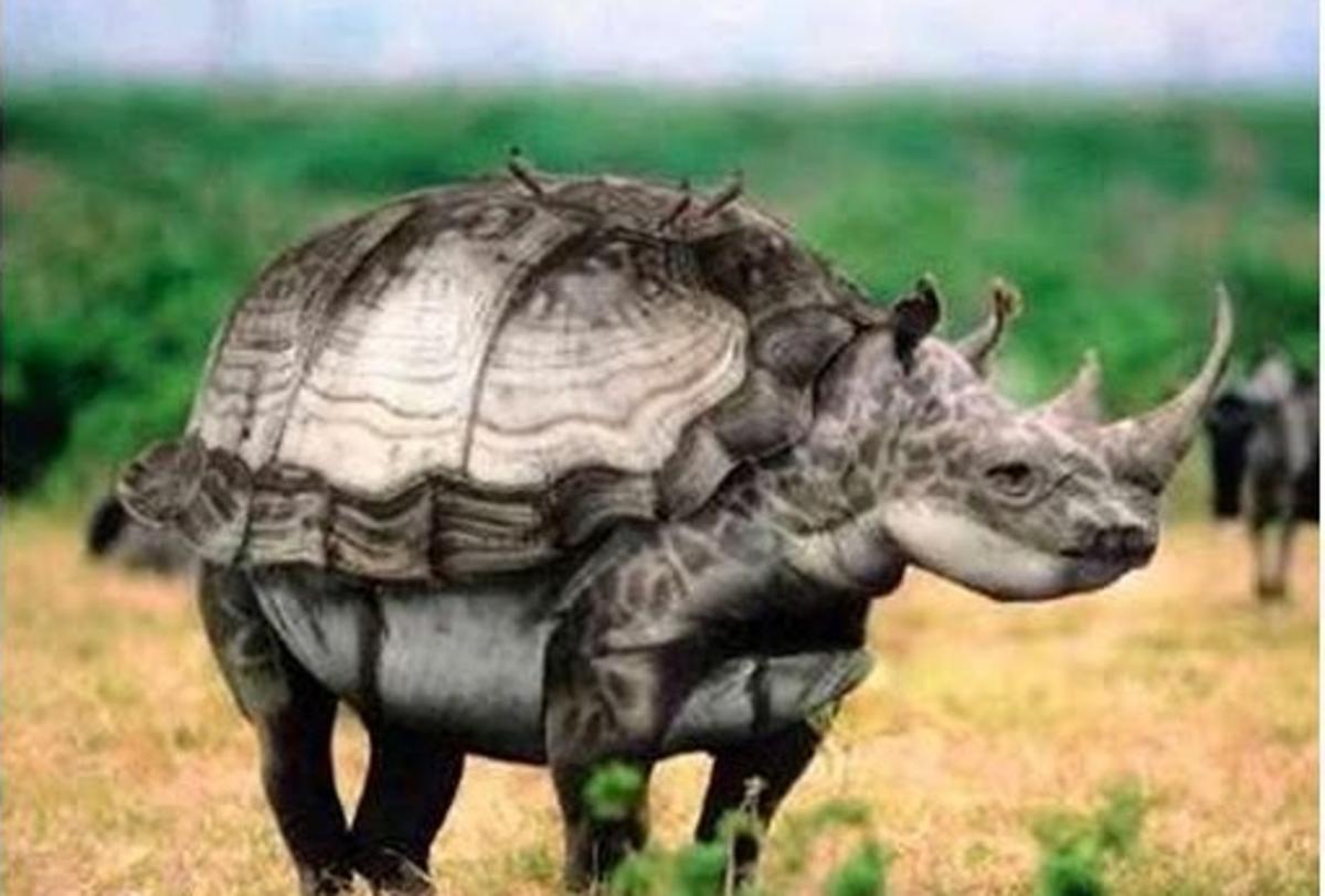 Turtleceros - dangerous armored rhinoceros turtle