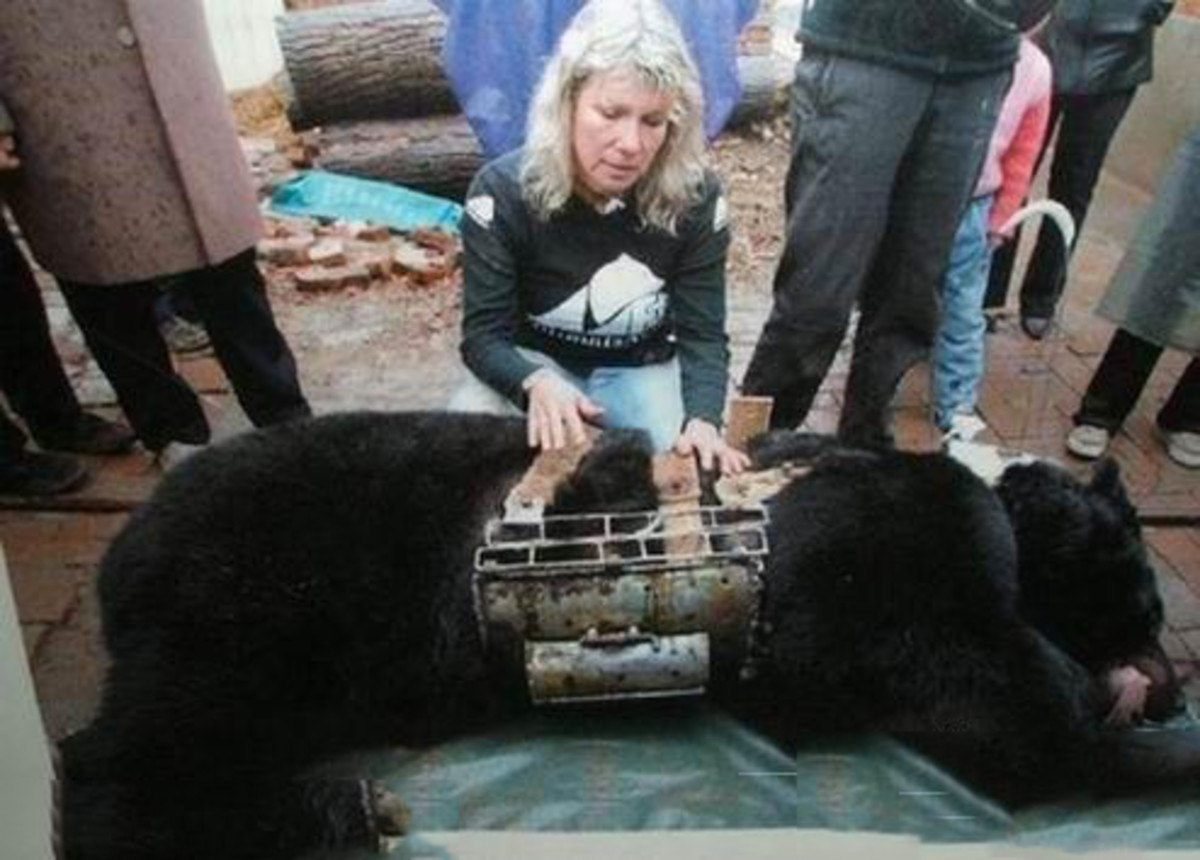 a-teary-mother-bear-killed-her-baby-and-committed-suicide-a-heart-breaking-true-story