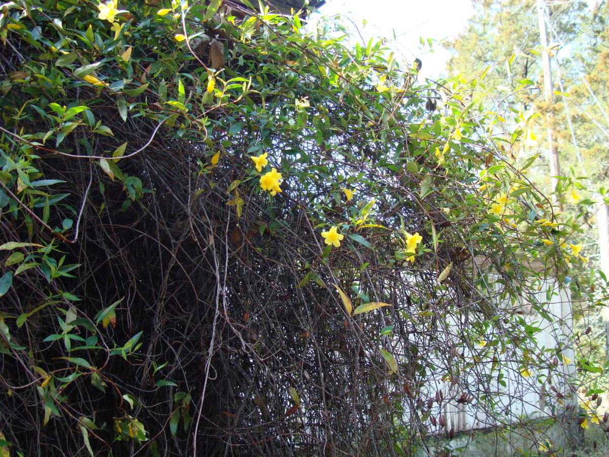 Carolina Jasmine is 20 years old.
