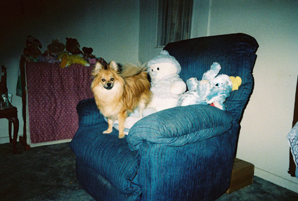 Sweetie with his snowman and other toys,