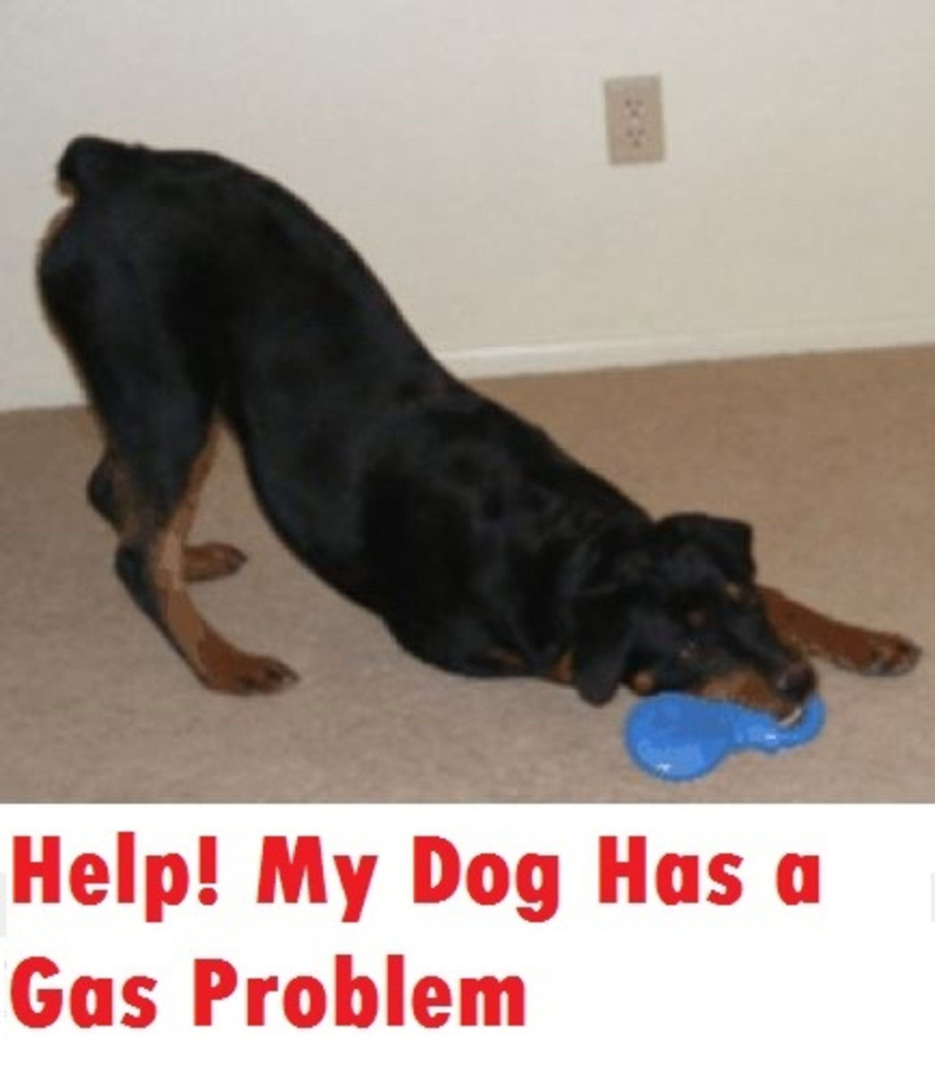 Help My Dog with a Gas Problem