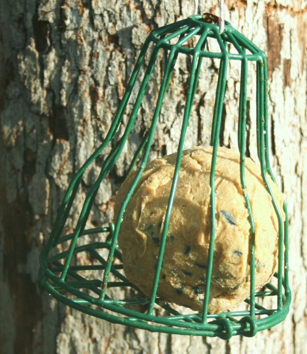 You can also roll homemade suet into balls. No matter how you serve it, wild birds flock to homemade suet!