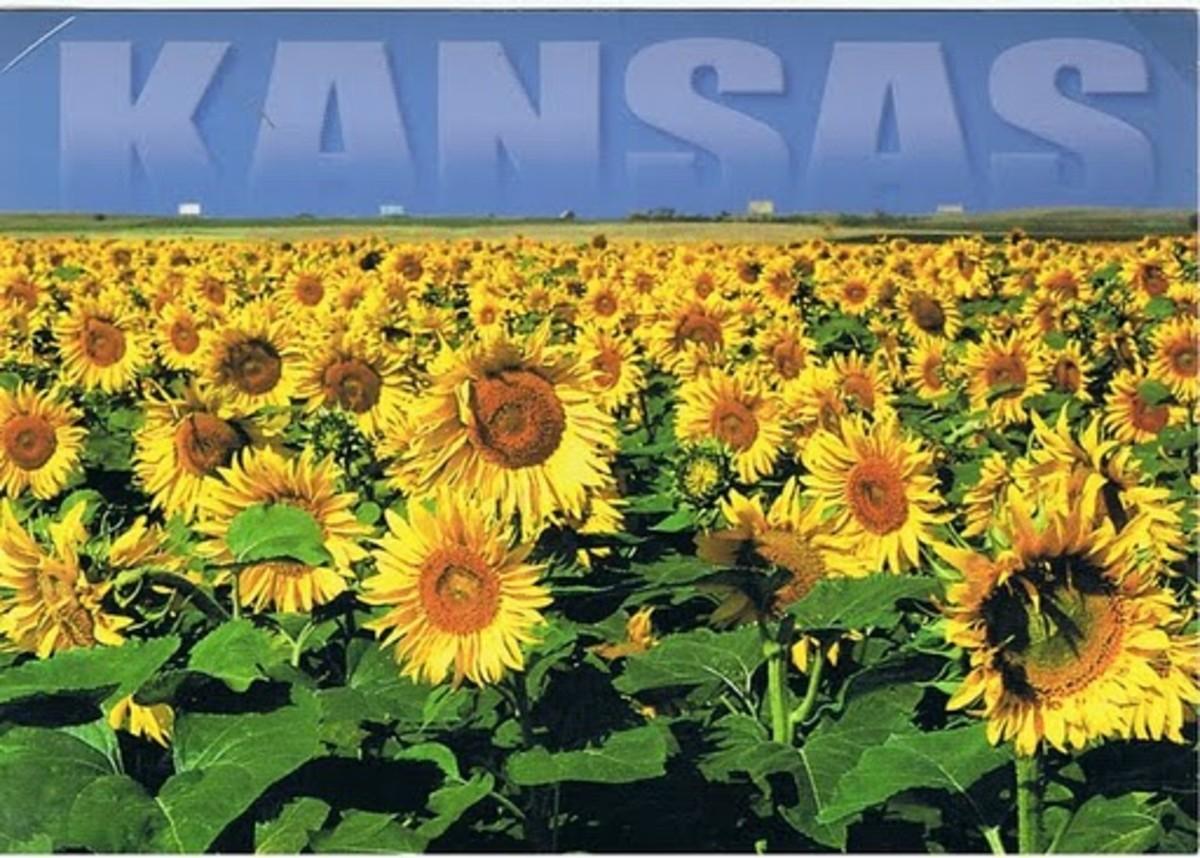 Sunflower Kansas State Flower