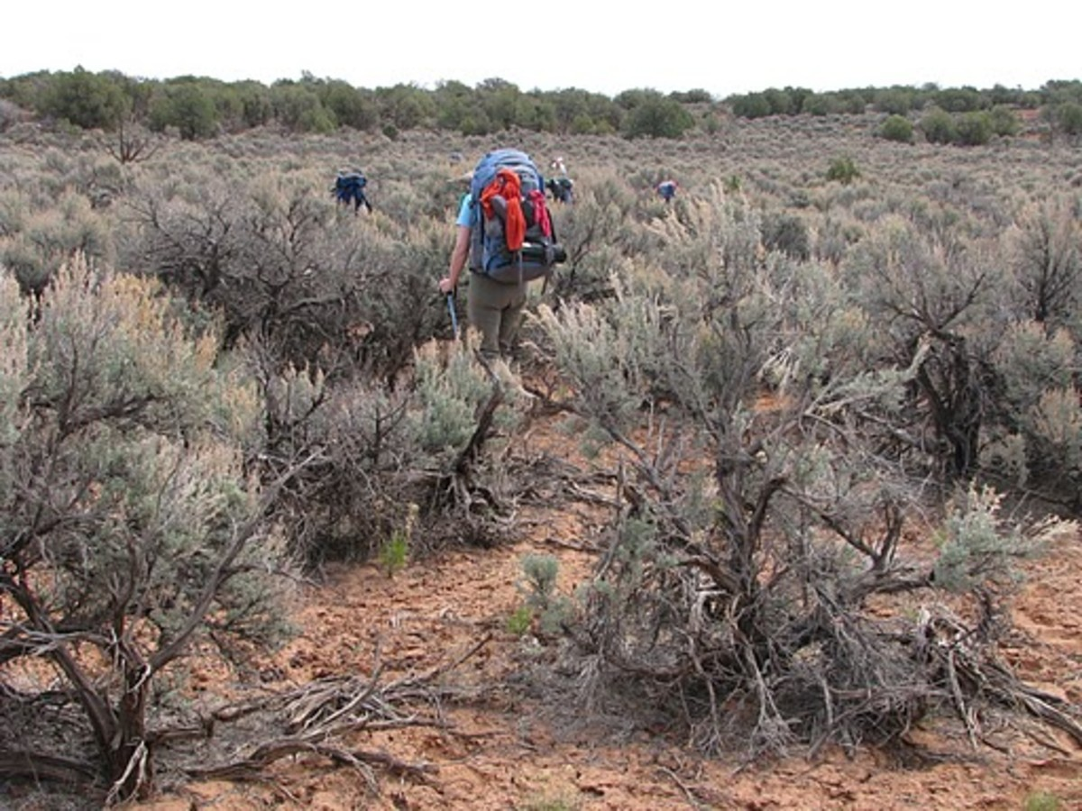 Sagebrush Nevada State Flower