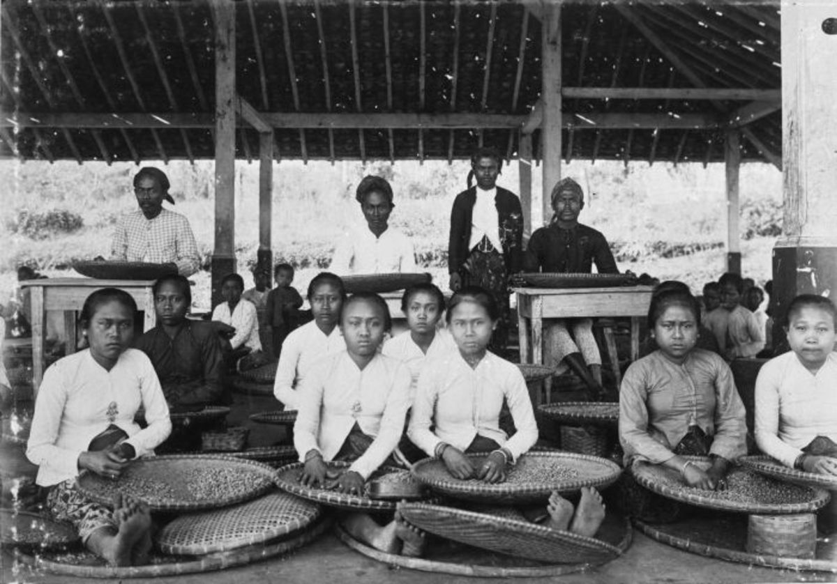 Coffee sorting in Dutch East Indies in 1900-1920, source Wikipedia - history of coffee mugs