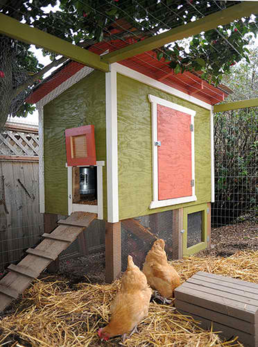 Everything You Need for Urban Chicken Raising from The Chicken Whisperer