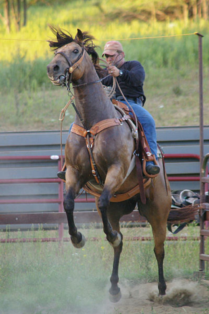 If you don't want this to be part of your everyday ride, then you need a strong relationship with your horse and the right equipment to go with it.