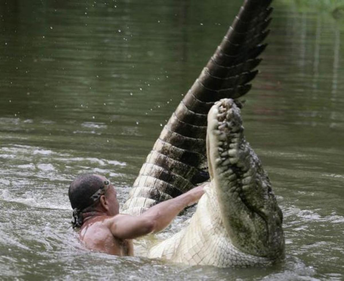 The Australian Crocodile Whisperer