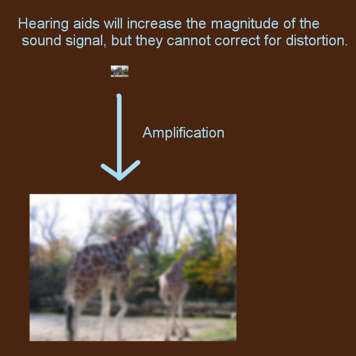 Hearing aids will make sound louder, but they cannot correct distortion caused by damaged cochlear hair cells (click to enlarge).