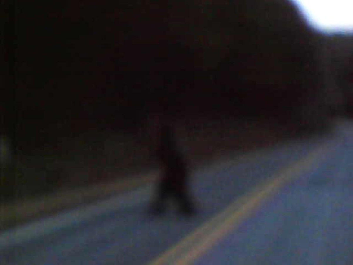 Knobby runs across the road and can be heard to scream or snarl at me as I video taped it. We saw it crossing the road and it was visible for a very few seconds. Not over 10-15 seconds.