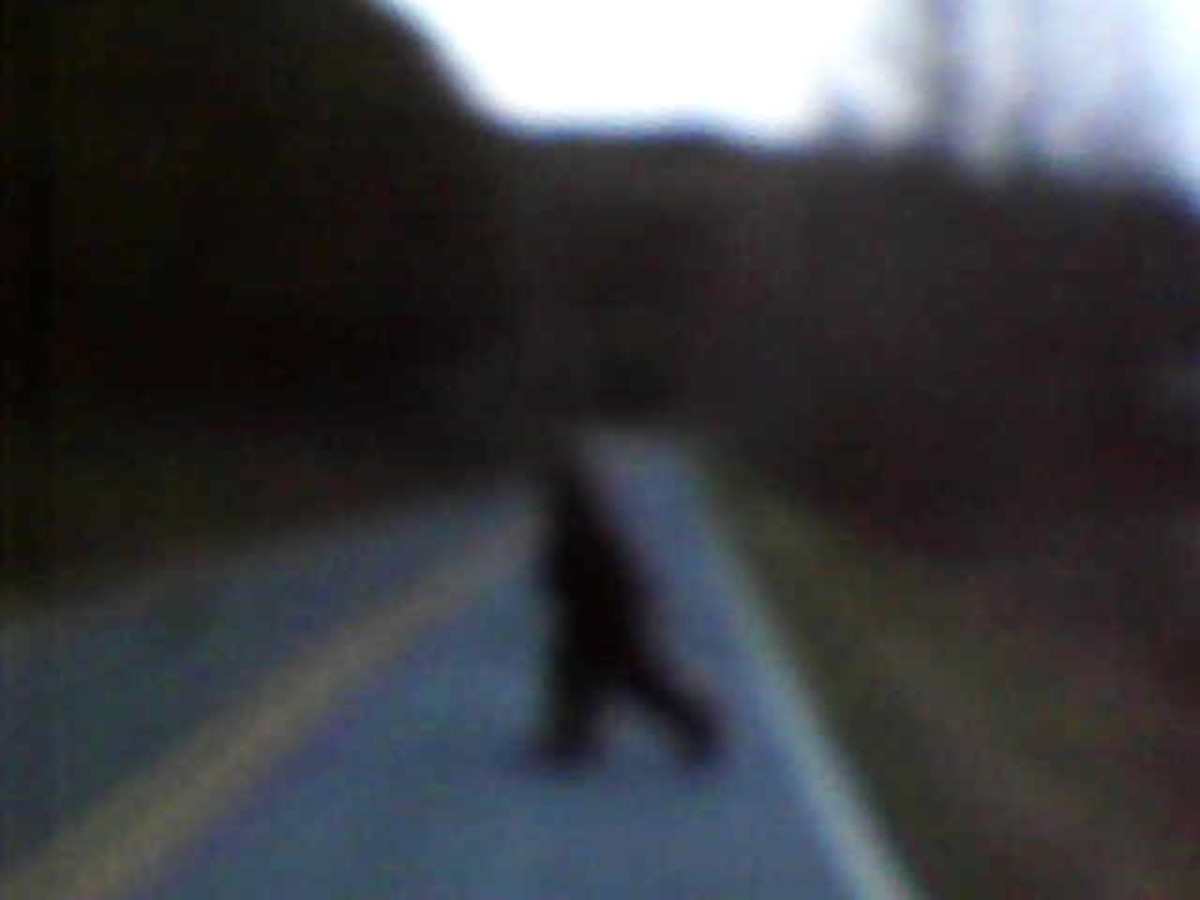 Big Foot Or Knobby Is Alive And Well In North Carolina