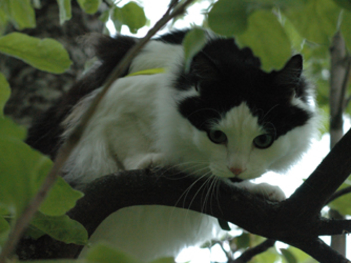 Hmmm....I think that's her now. It looks like..., yea..., maybe...,YES! Tuna this time! This tree thing works out great!
