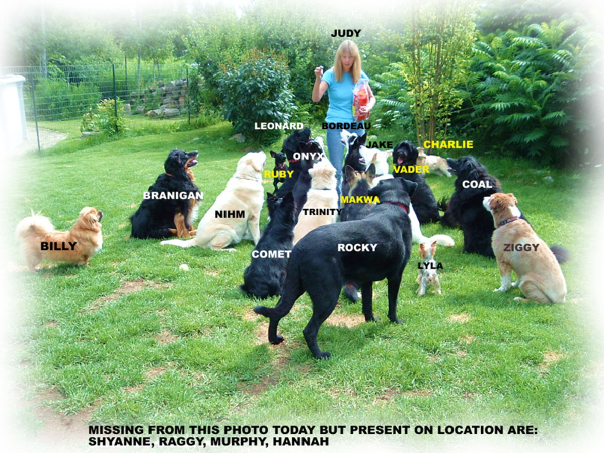 Opening a Doggy Daycare or Pet Resort - What You Need To Know