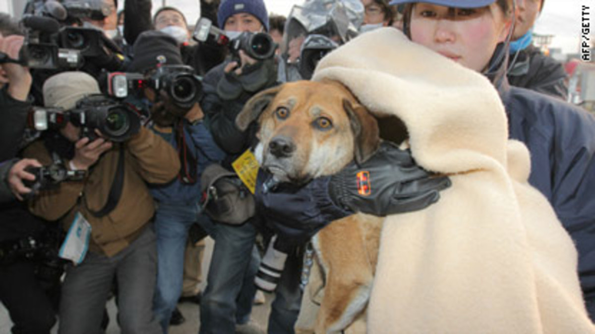 japans-crisis-and-its-effect-on-pets-and-animals-earthquake-tsunami