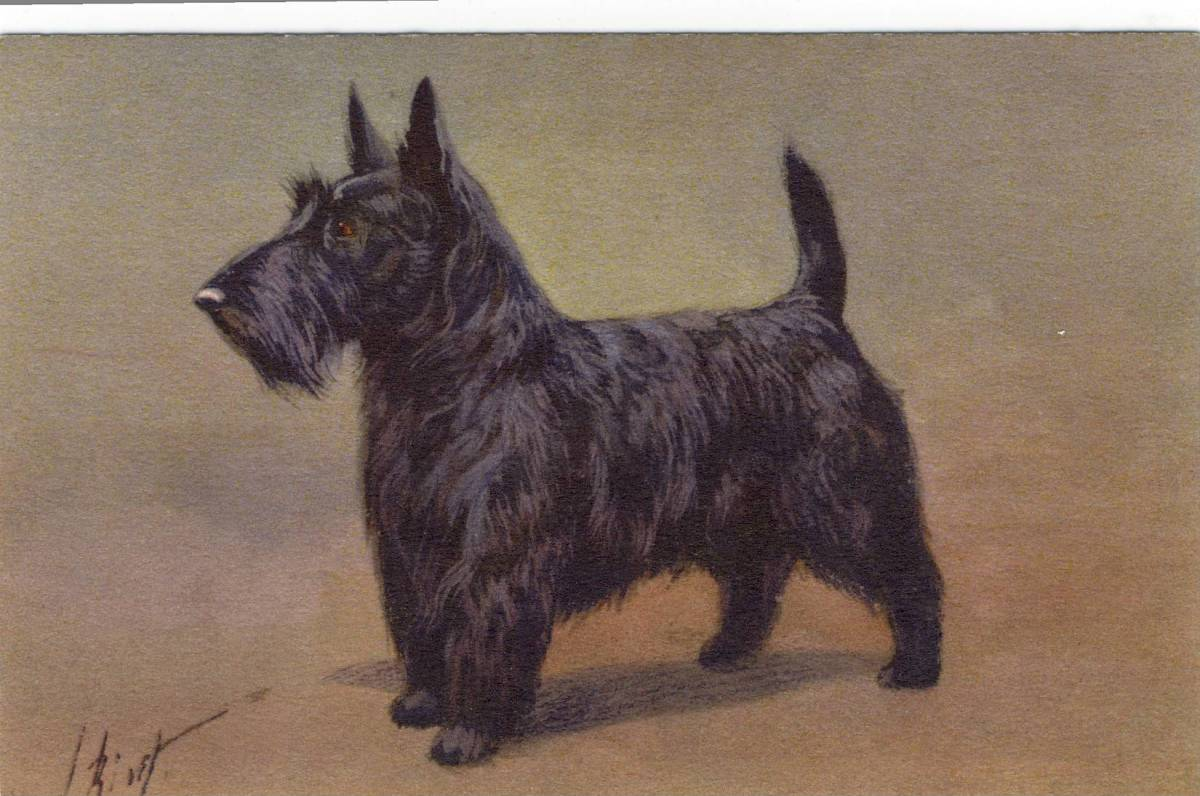 Scottish Terrier, Commonly called Scotty Dogs