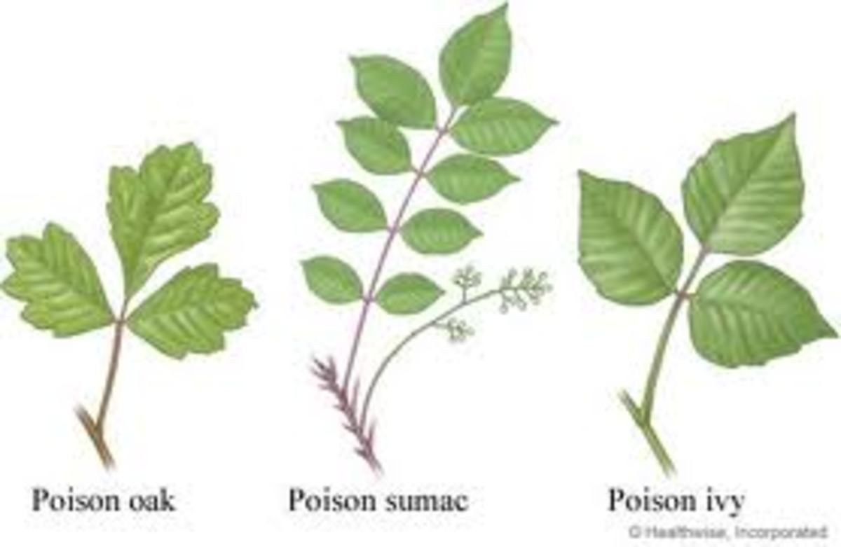 poison-ivy-rash-heals-more-with-a-day-at-the-swimming-pool