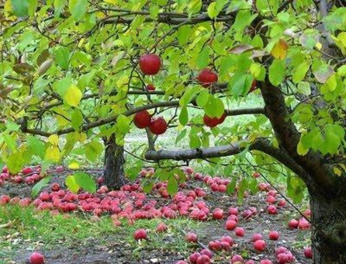 """Literary Argument on Robert Frost's """"After Apple-Picking"""" (rough draft)"""