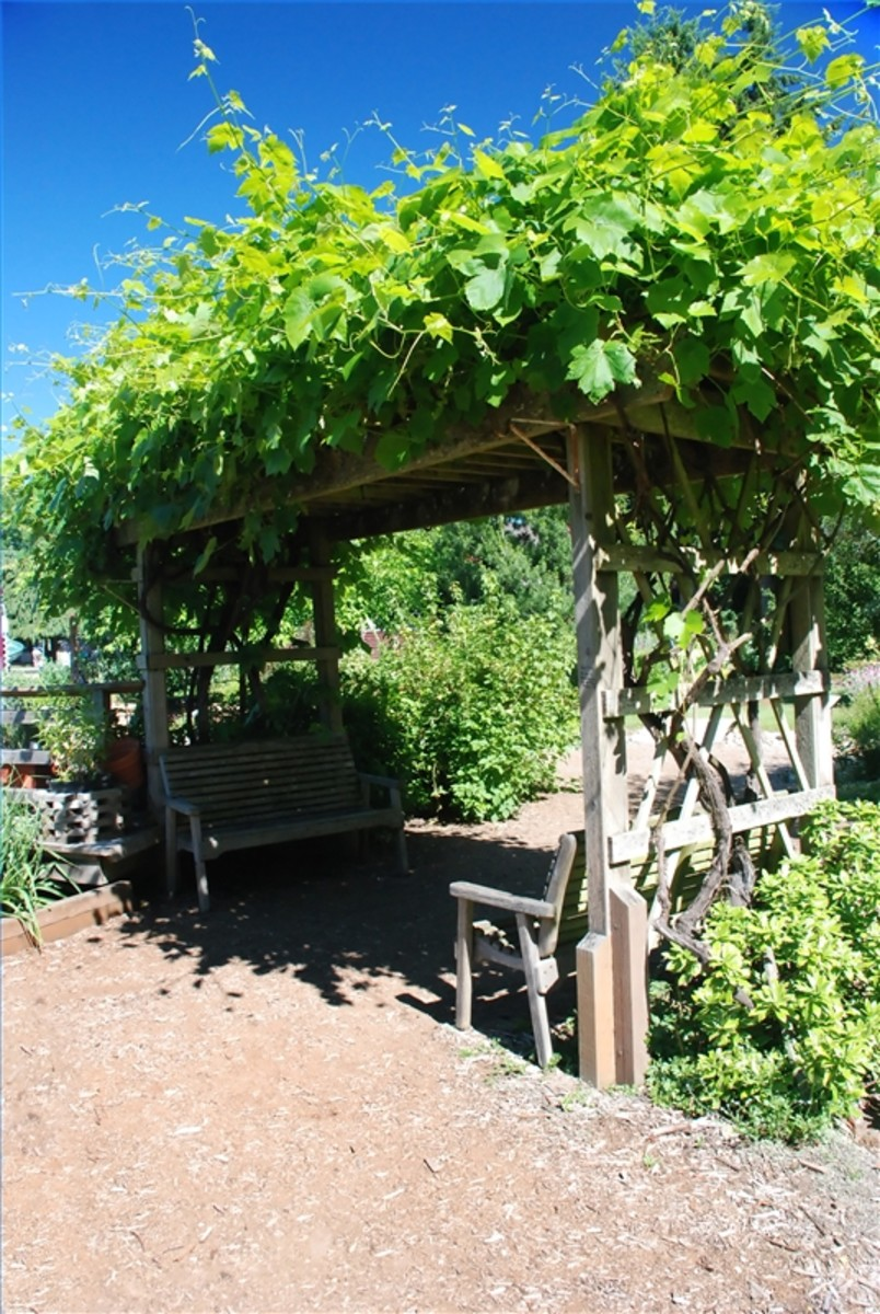 Egg crate patio shade with a canopy of well-developed foliage.